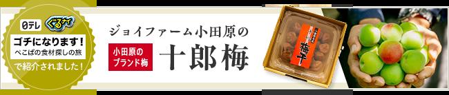 小田原のブランド梅 十郎梅