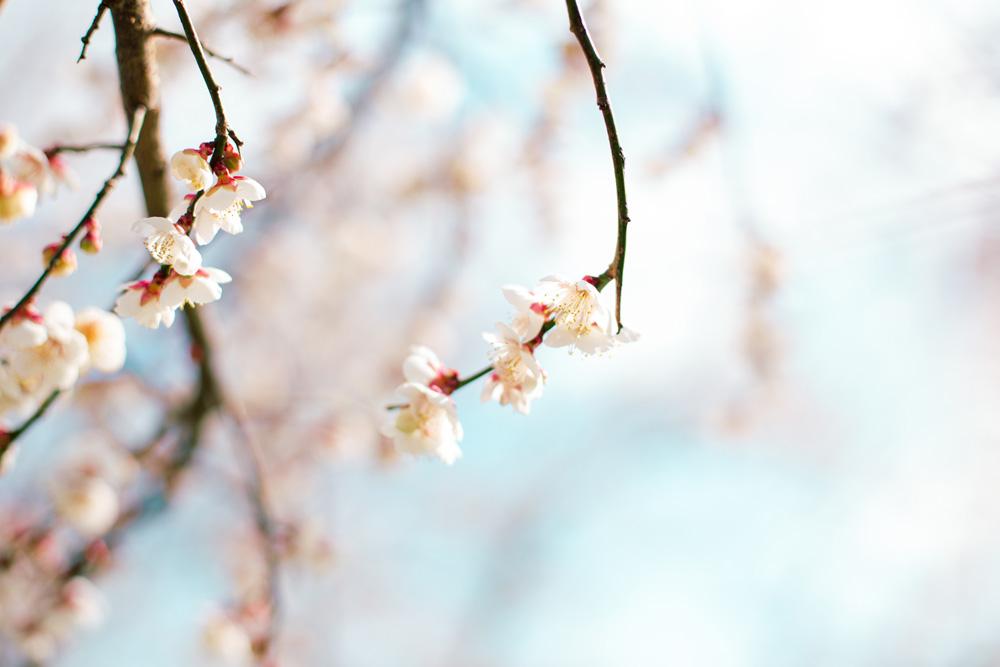 2月 開花