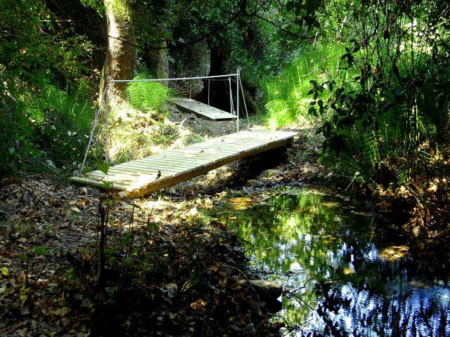 7 Brücken gibt es im Zauberwald
