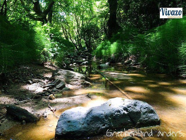 Magic forest Skiathos