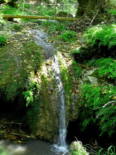 Wasserfall Zauberwald