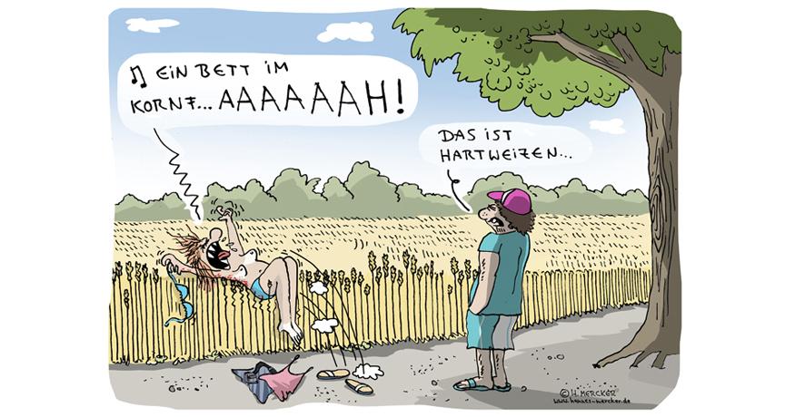 Cartoon von H. Mercker über die Nachteile einiger Weizensorten.