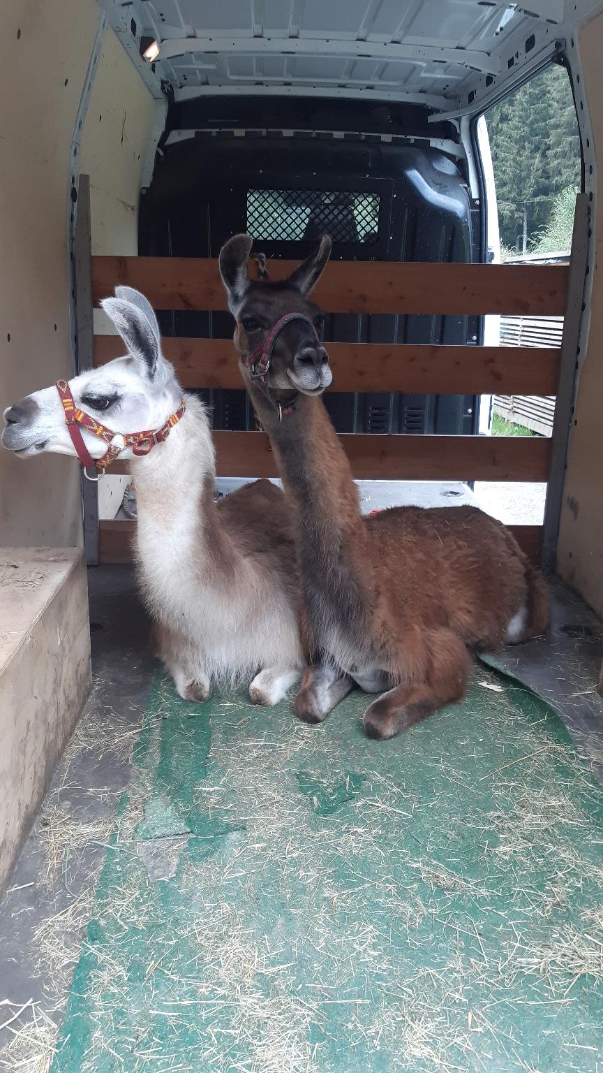 Hera und Beatrice im Lamamobil