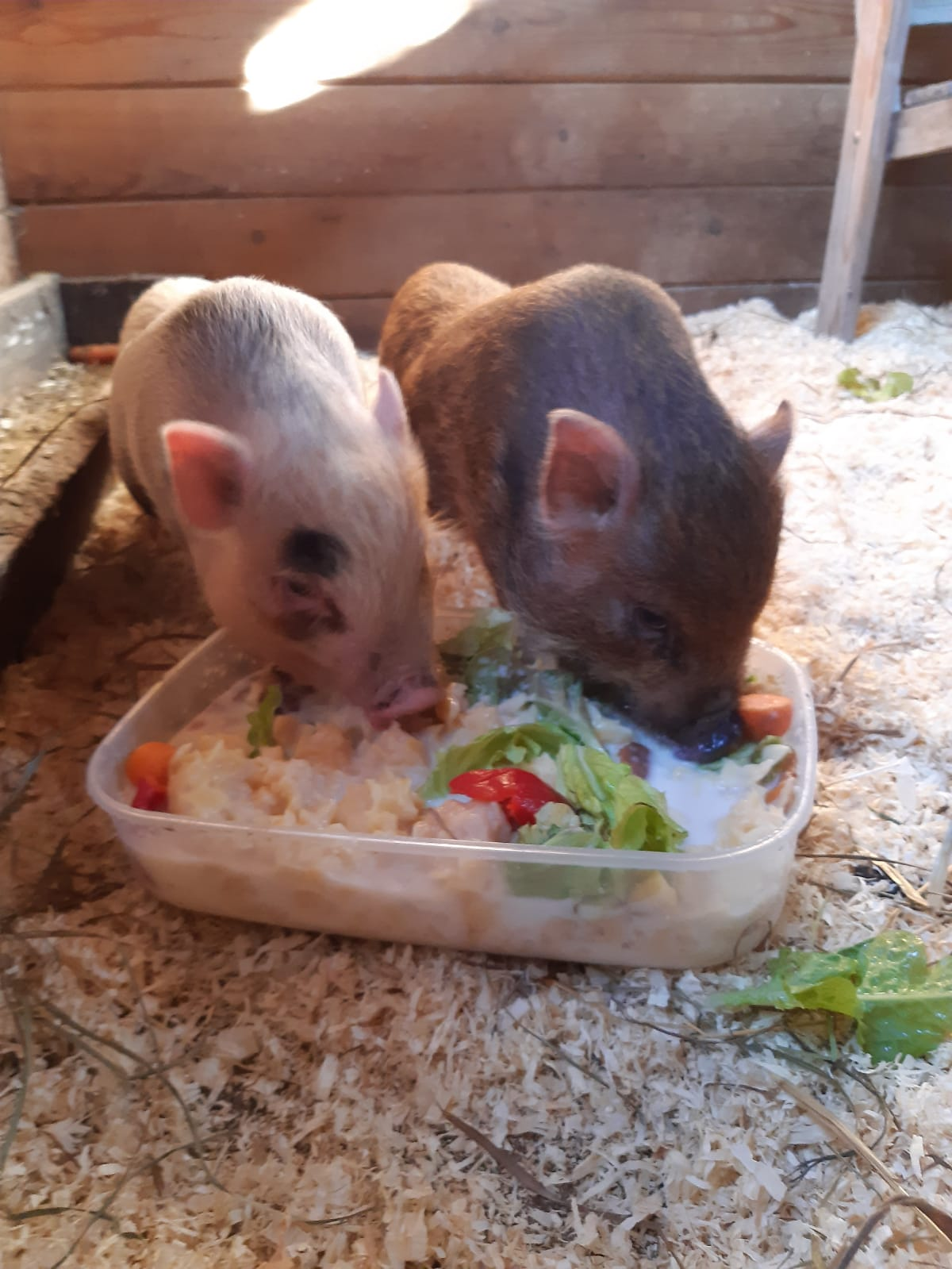 Missy und Winny