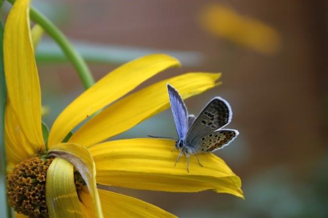 Gast in einem gepflegten Garten