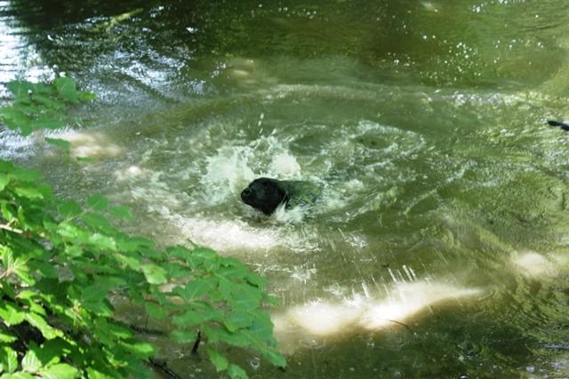 Pauls erster Schwimmversuch