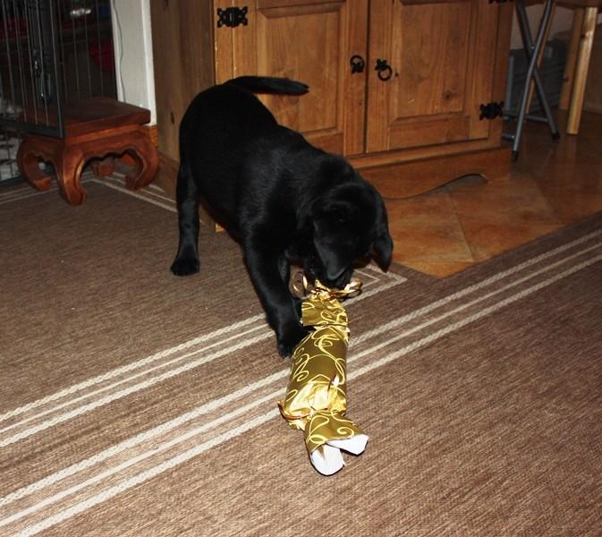 Paul hat ein Geschenk von Santa Pfote bekommen :)