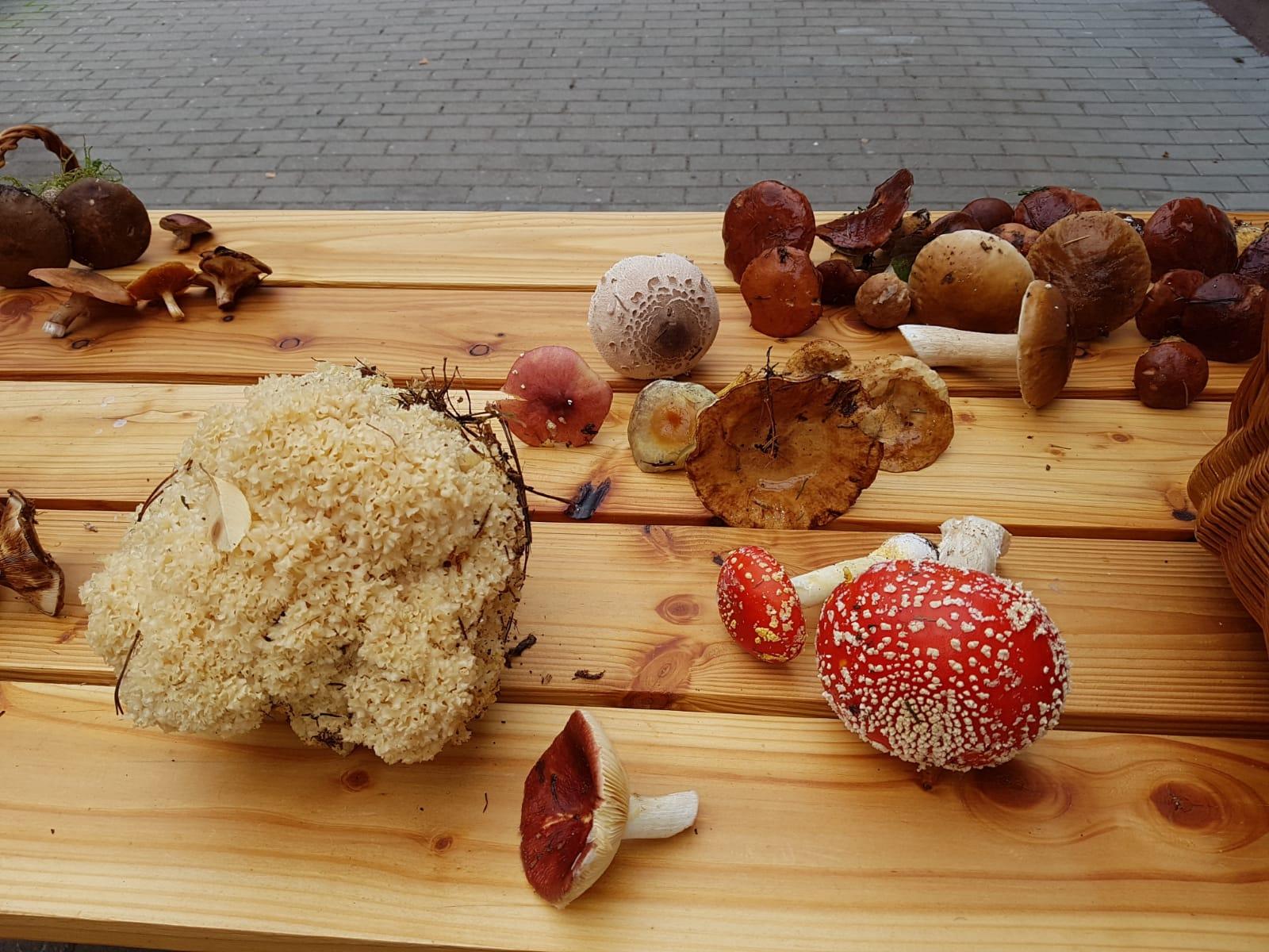3.10.2021 Pilze suchen und bestimmen mit Stephan Thasler