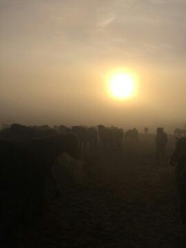 Morgennebel über der Stutenkoppel
