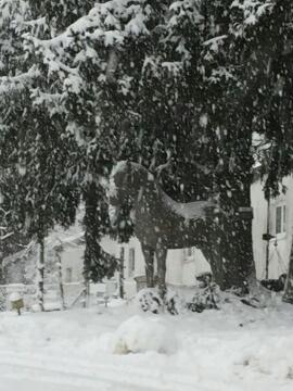 """""""Julius"""" im Schneesturm"""