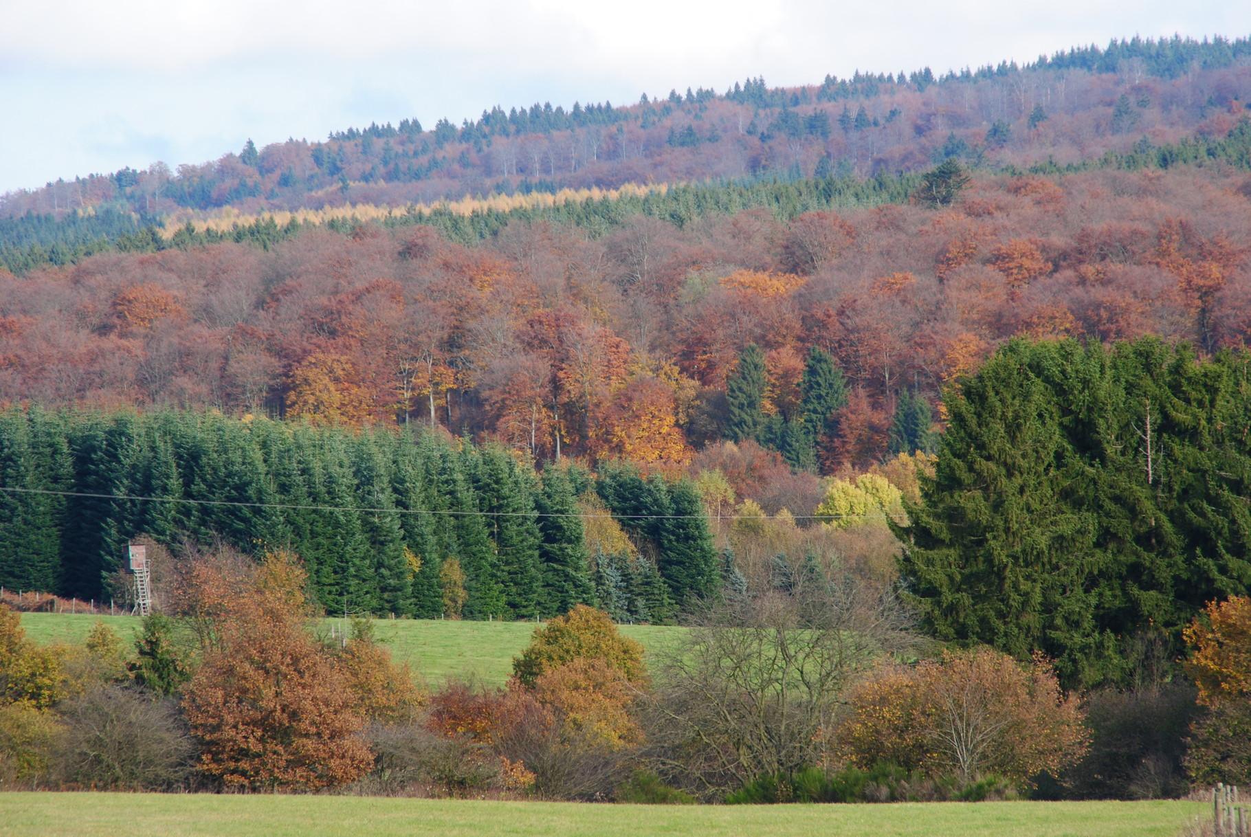 Herbst im Schwarzwälder Hochwald