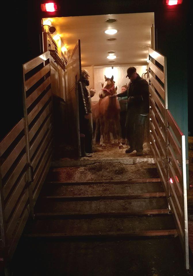 Mutig sind sie vom LKW geklettert und in ihr neues Zuhause eingezogen ..