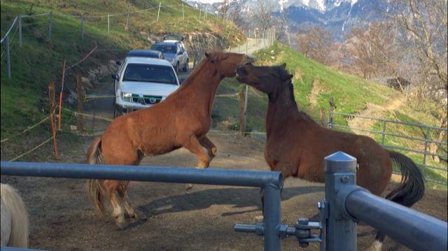 Lächeln Sie die Pony Dating-Agentur Videos