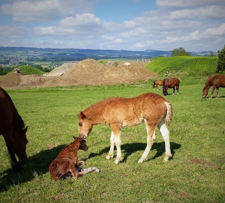 Hier begrüsst Halisso seine  gerade geborene kleine Schwester Hanna .