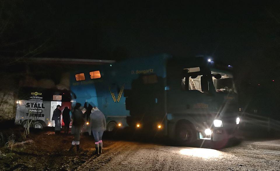 Endlich, Donnerstagabend gegen 18.30 Uhr, ist der Pferdetransporter vorgefahren.