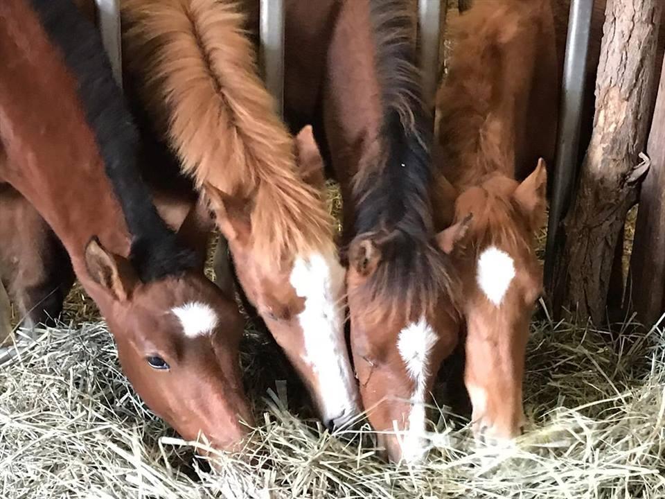 von links Jade , Djaline ,La Belle , Daphne