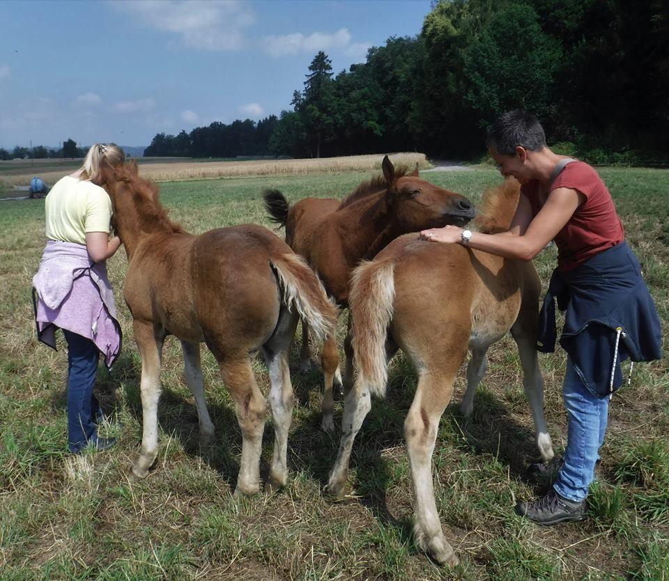 Mit neuen Bildern von Kira und Melanie die am Wochenende  6.7.- 8.7.2018  die Fohlenherde in Jonen besucht haben .