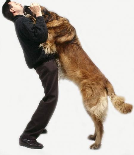Mon chien saute sur les gens !!