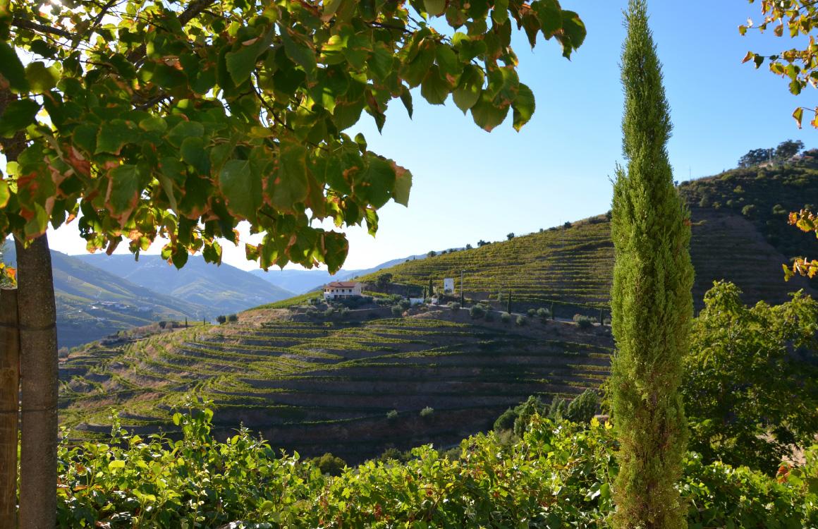 Valle-del-Douro-nord-portogallo
