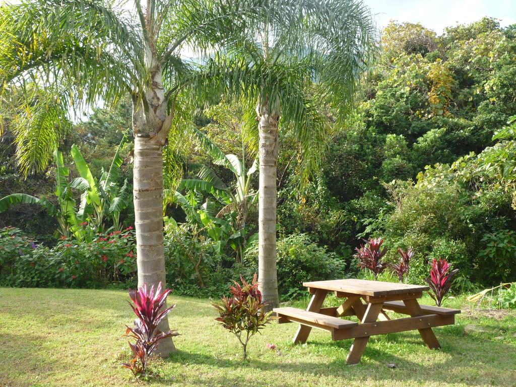 女王ヤシの下のピクニックテーブル Picnic table under coconut palm