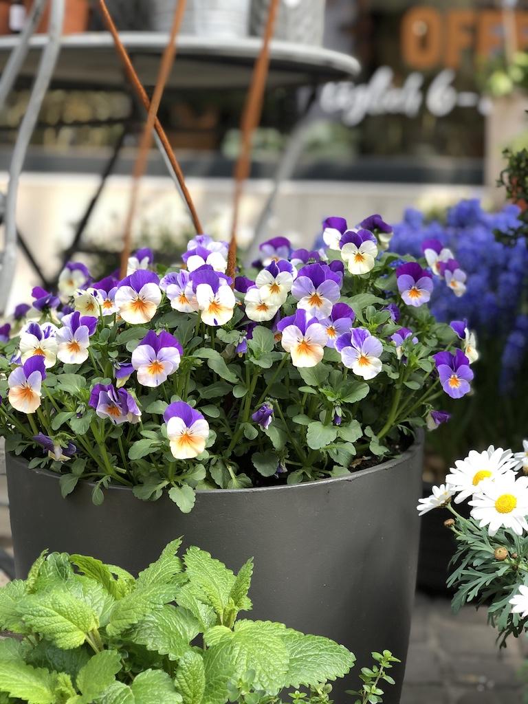 Blumen für Draussen