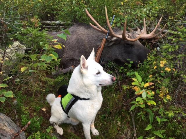 hunting, jakt, jagd, Elchjagd, moosehunting, älgjakt
