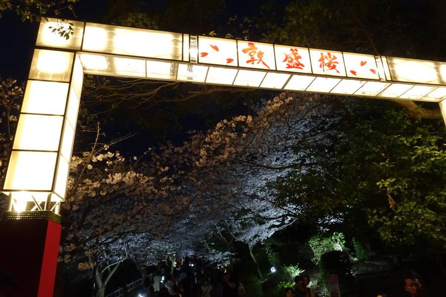 エンタメ夜桜?須磨浦公園の敦盛桜【日本半周してた旅~第37話】