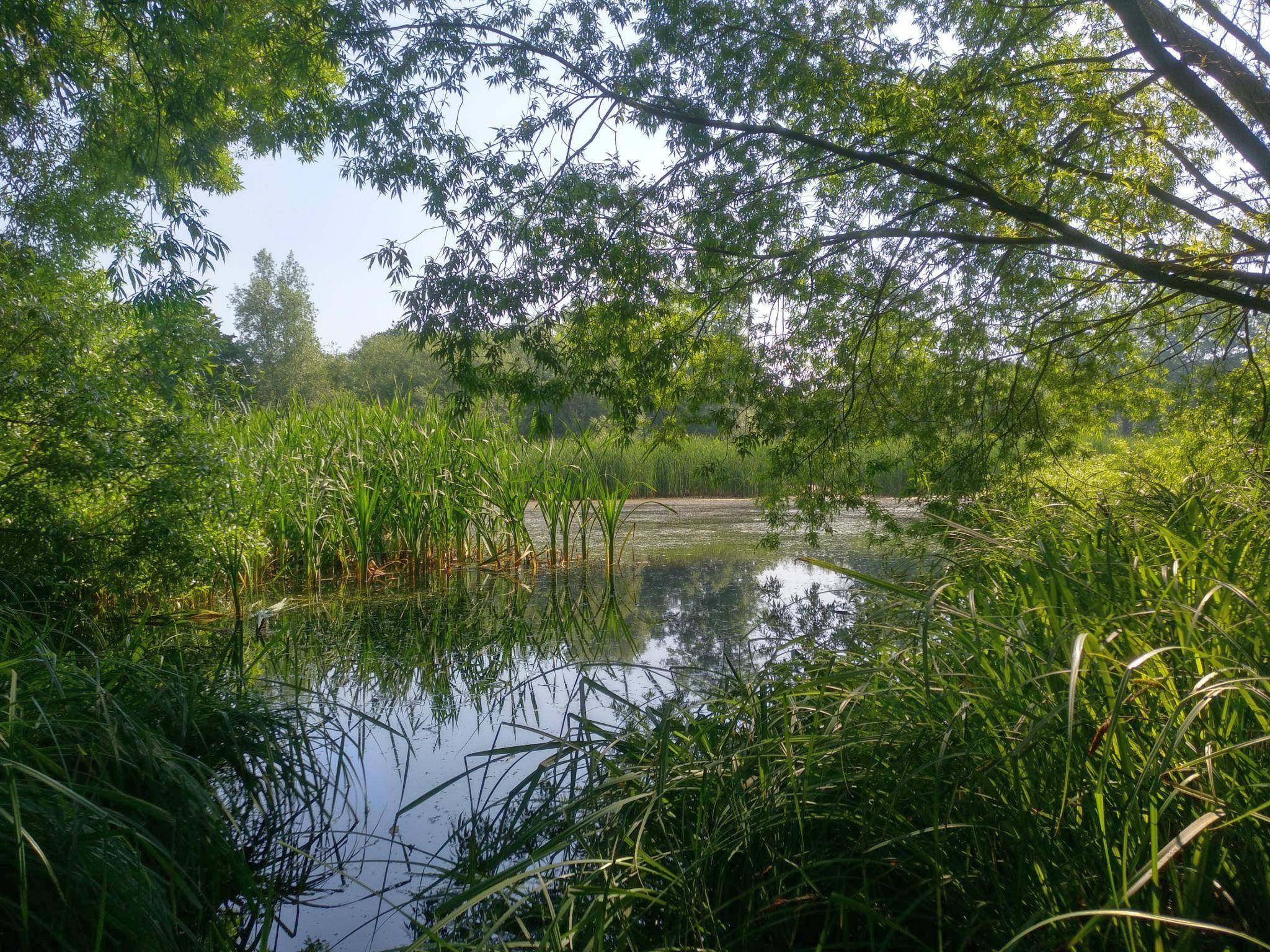 Blick auf den Moorwiesenteich (NABU / F. Schmidt)