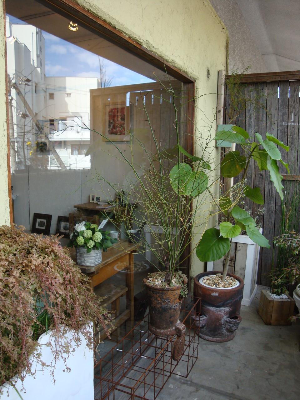 植物アーテイスト鳥越ワールド