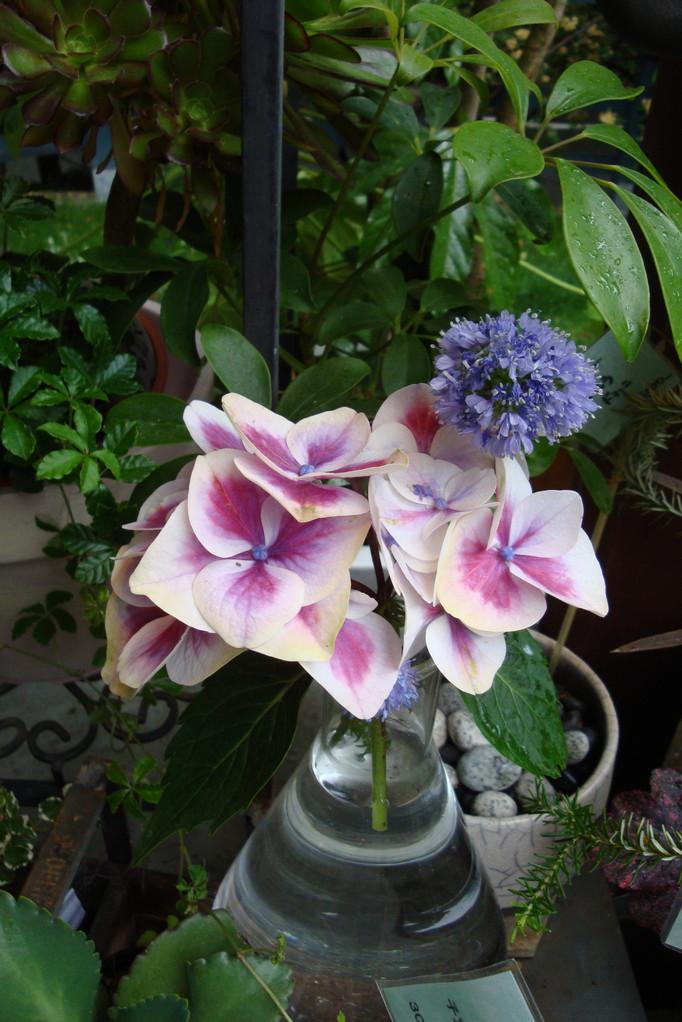 雨の日のplants・・
