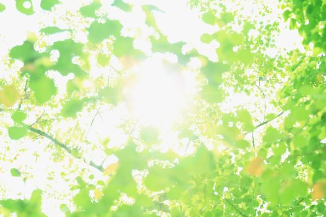 写真 「木漏れ日」