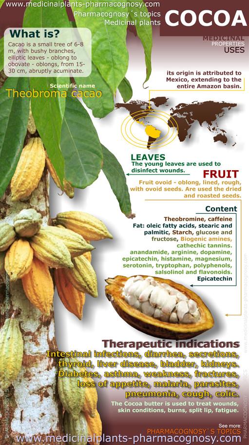 Cocoa benefits. Infography - Pharmacognosy - Medicinal Plants