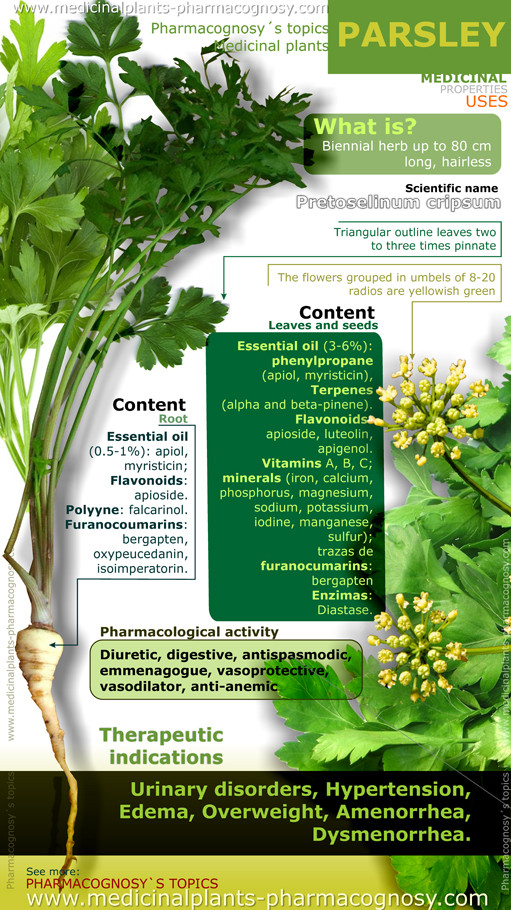 71e637c57f9 Parsley health benefits. Infographic - Pharmacognosy - Medicinal Plants