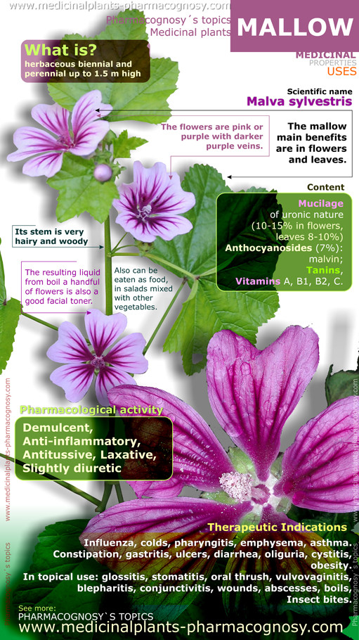 Mallow Health Benefits Of Mallow Plant Infographic