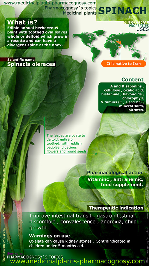 Spinach benefits. Infographic