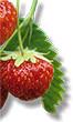 Strawberry - Medicinal plants