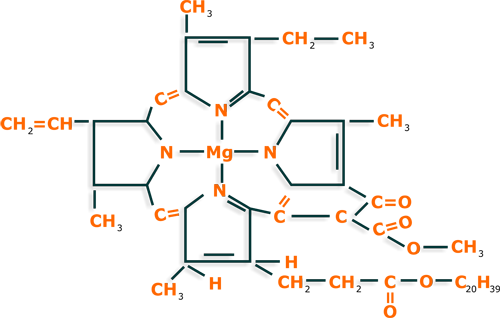 Chlorophyll pharmacognosy medicinal plants chlorophyll structure ccuart Image collections