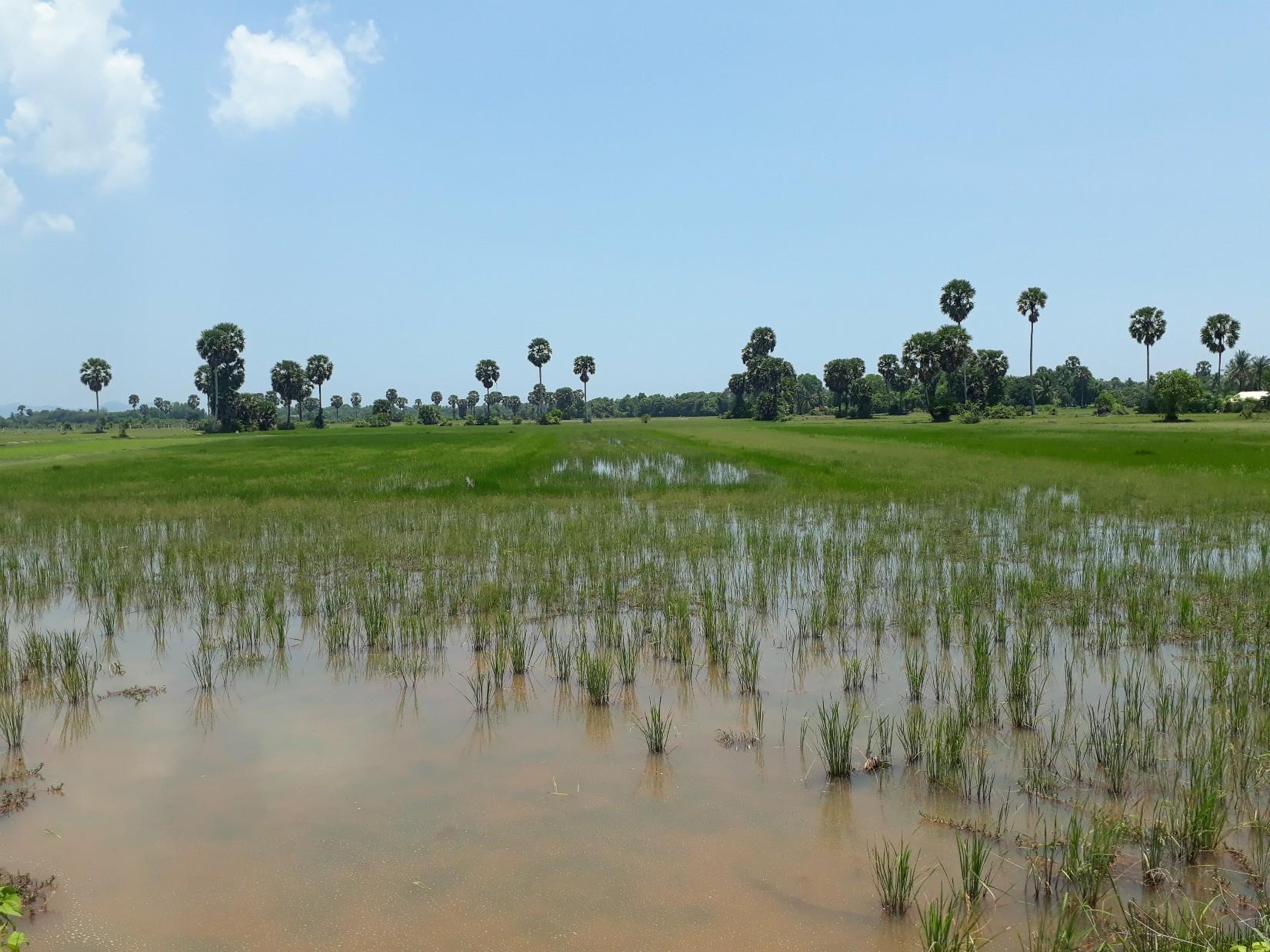 La campagne à l'extérieur de Kampot.