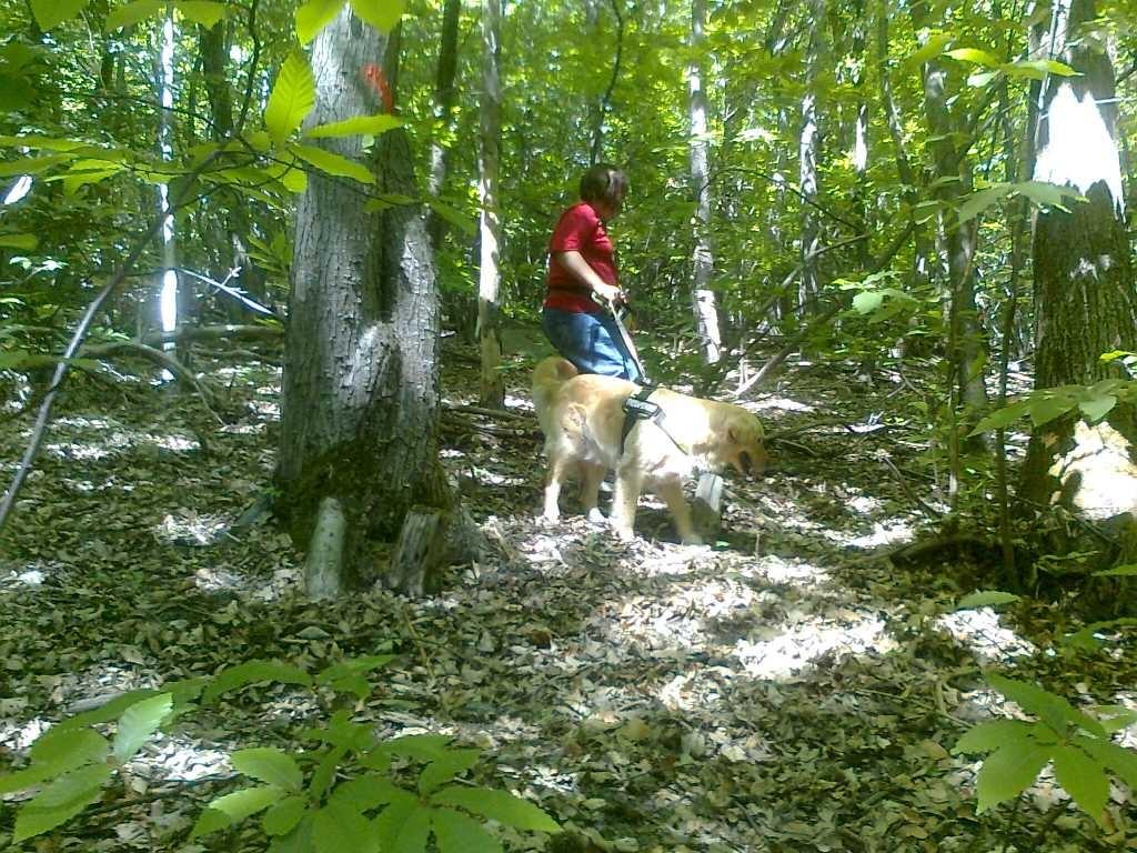 ... durch den Wald streifen...