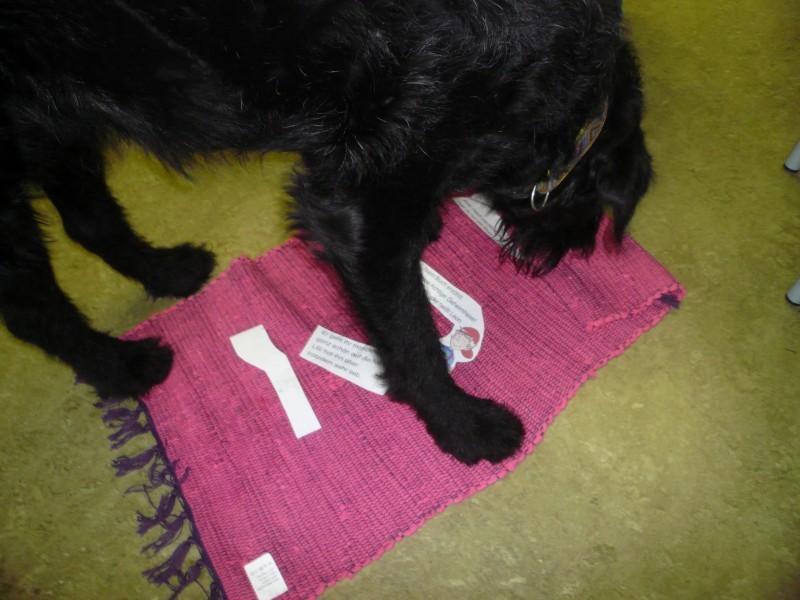 Charlie rollt den Fleckerlteppich auf