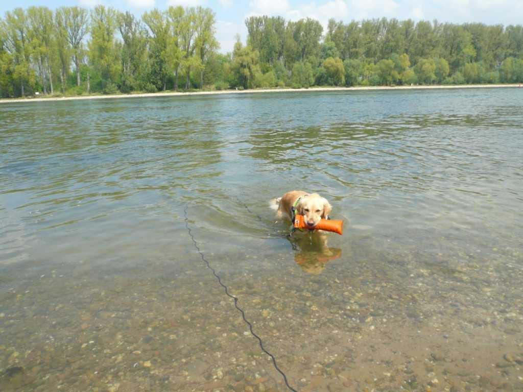 ... und Krümel beim Schwimmen und apportieren beobachten