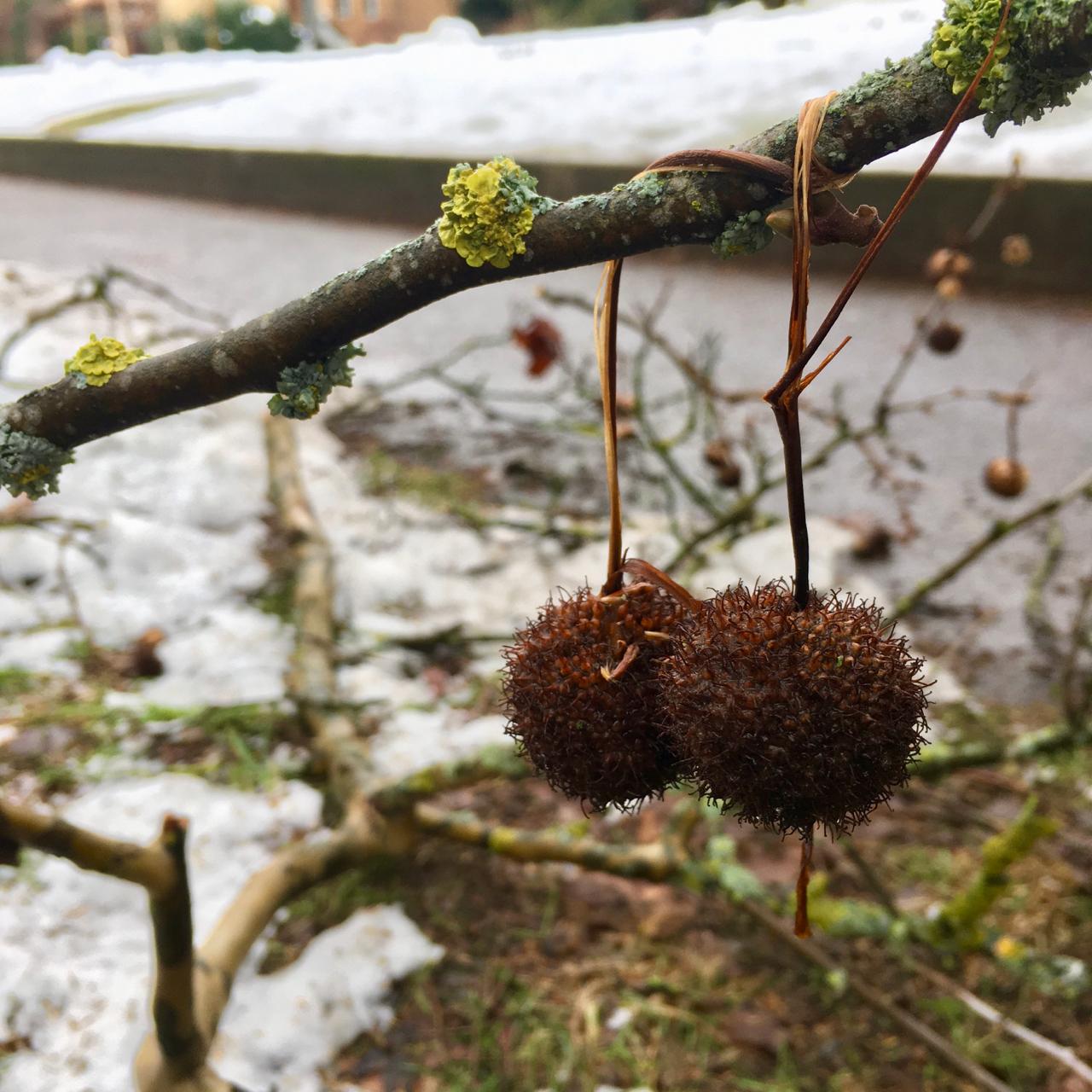 Fundstücke nach dem grossen Schneefall