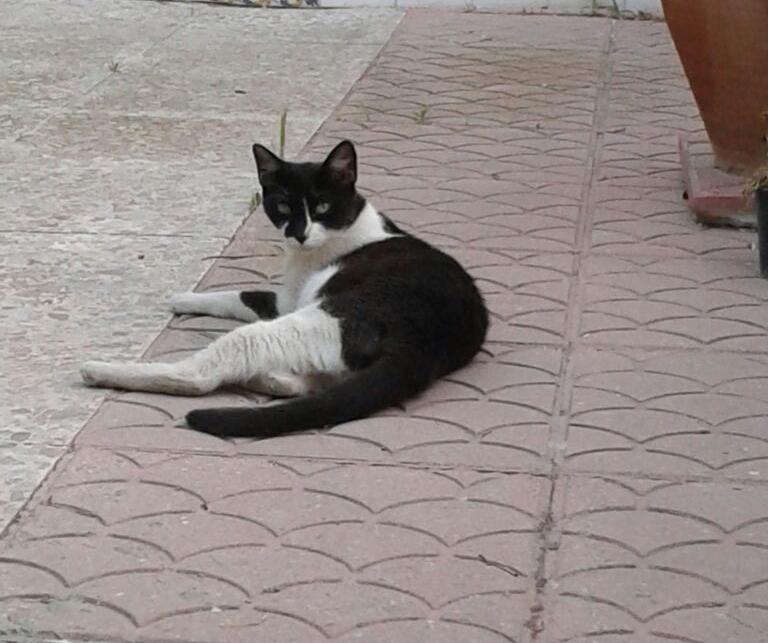 Muddi: Äußerst mißtrauisch, aber immer besorgt um Ihre 3 Katzenkinder!