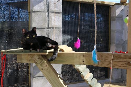 gatos torrevieja CES