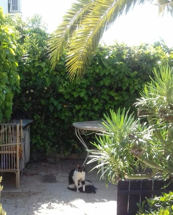 """""""Muddi"""" und die 3 kleinen Kätzchen Paulinchen, Paulchen und Paule im Nachbargarten..."""