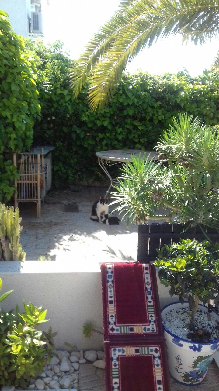 Es war die reinste Idylle, bis die Besitzerin anreiste und die Katzen Dauerstress aussetzte...