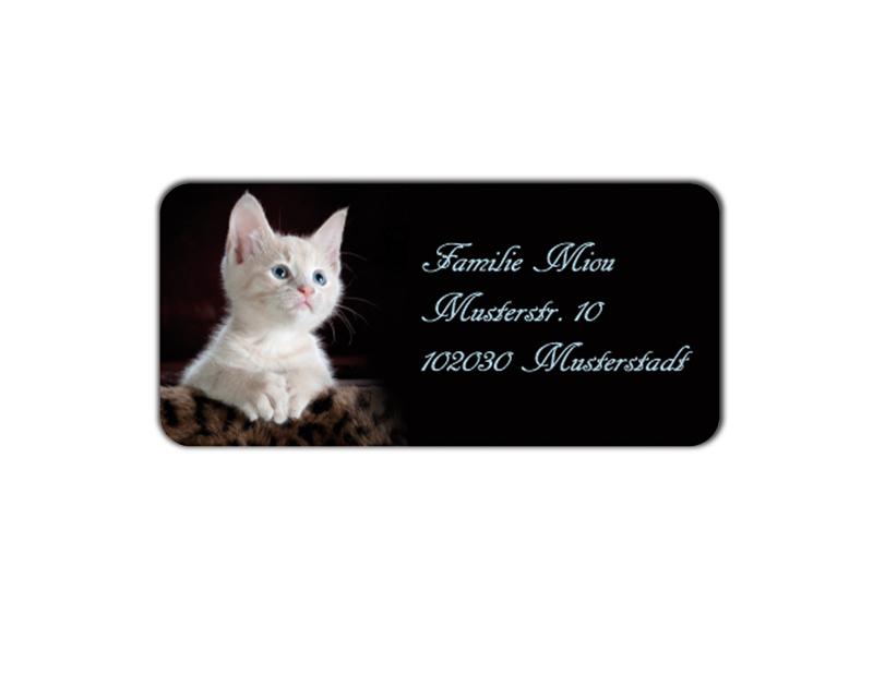 eckige Adressaufkleber mit niedlichem Kätzchen, auf umweltfreundlichen PVC-freien selbstklebenden Papier, wasserfest