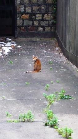 仁慈堂そばの猫