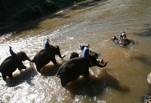 Elefanten Schule