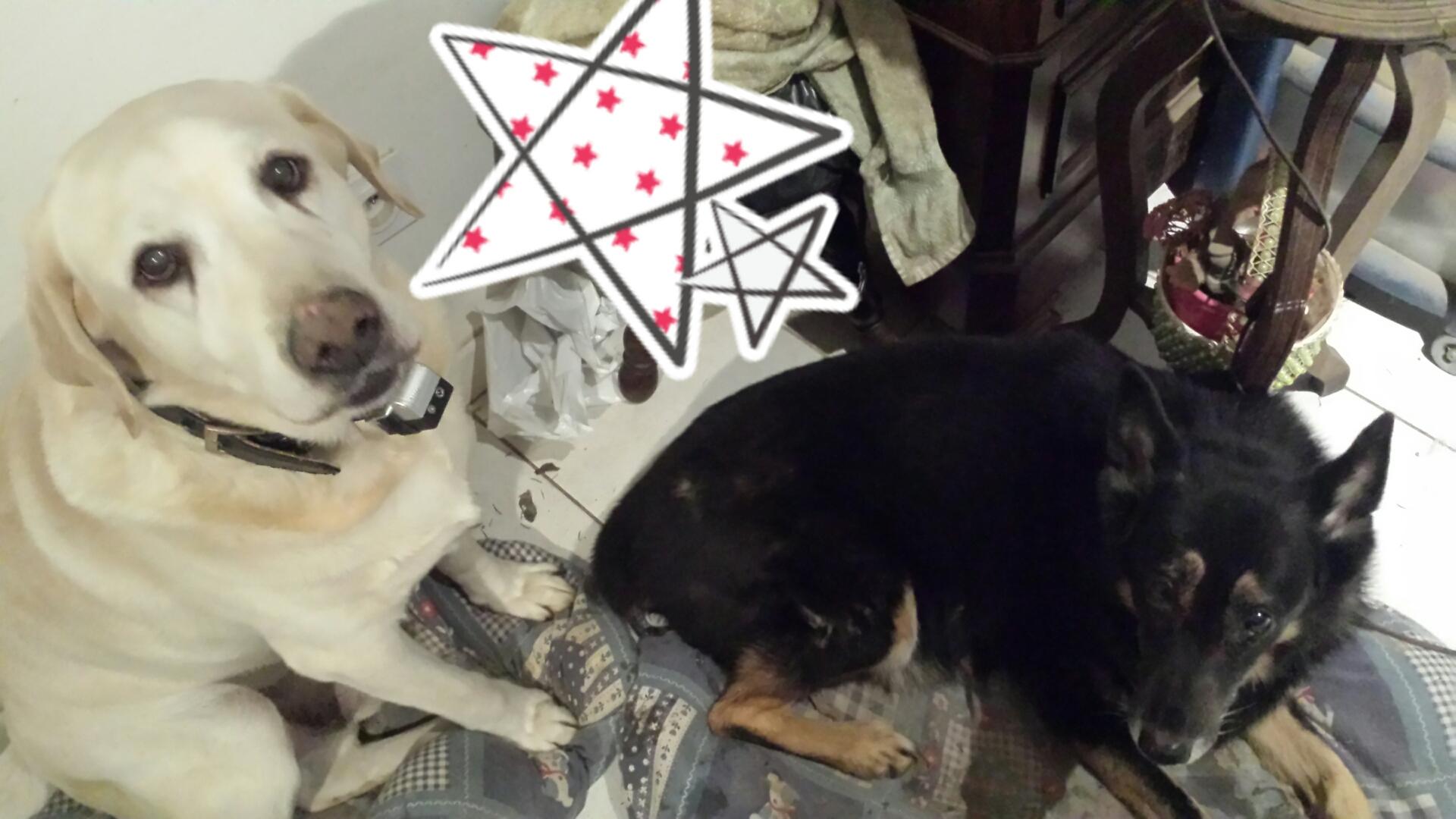 S.O.S. Bella et Brigand chiens à l'adoption